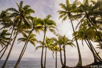 Hawaii-5115