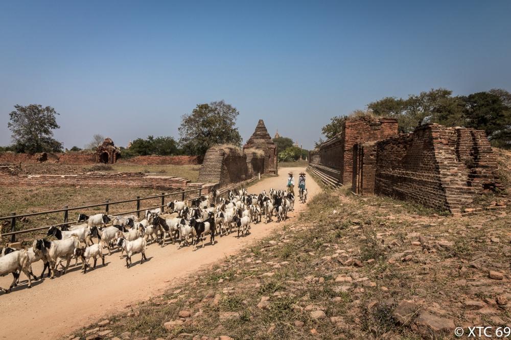 Myanmar-7896